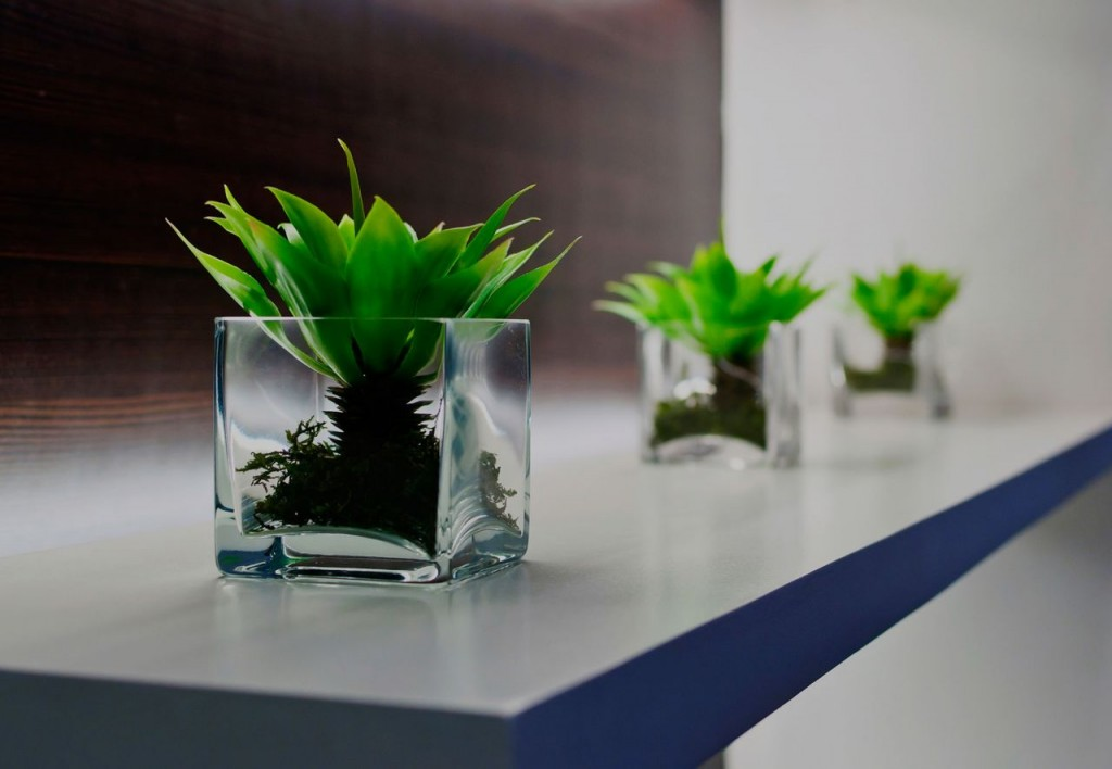 Plants in the office (7)