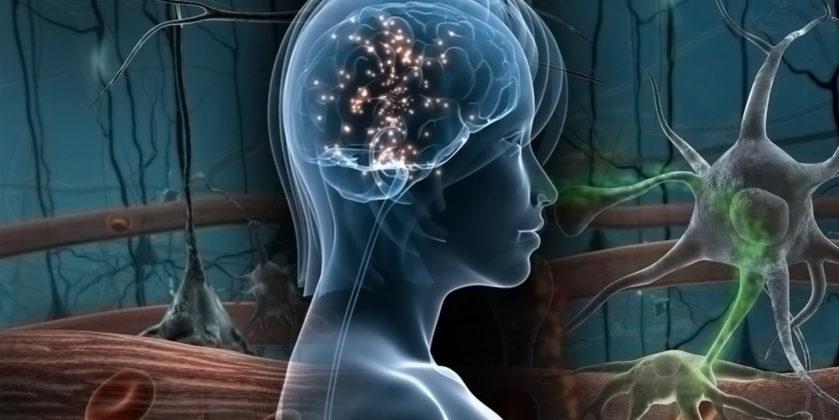 Νευρώνες σαν Κοινωνικό Δίκτυο